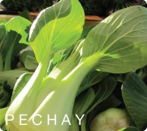 pechay